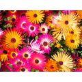 Ароматы цветов и растений