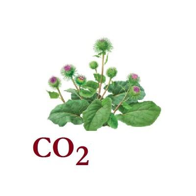 СО2 экстракт Лопуха (корень), 5 мл