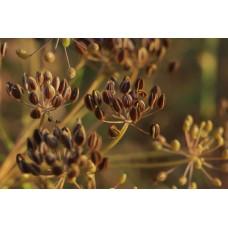 Со2 - экстракт семян Укропа, 10 мл