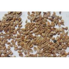 Эфирное масло морковных семян, 5 мл
