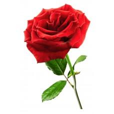 Эфирное масло Розы 1,5 мл