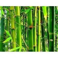 Сухой экстракт Бамбука, 10 г