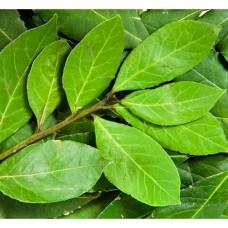 Гидролат Лавра (лист), 100 мл