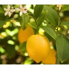 Гидролат Лимона, 100 мл