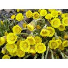 Гидролат Мать-и-Мачехи, 100% цветочная вода, 100 мл