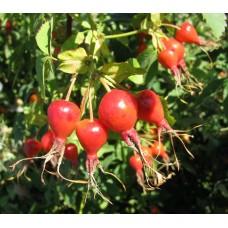 Гидролат Шиповника (ягоды), 100 мл