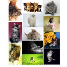 Картинки водорастворимые лист А4 Котята