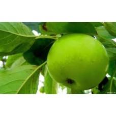 """Краситель пищевой  """"Зеленый """" 10 мл"""