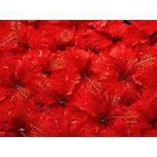 Красный классический (пигмент в глицерине), 15 мл