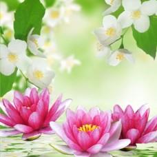 "Ароматическое масло ""Лилия и жасмин"" Water Lily and Jasmine, 10 мл"