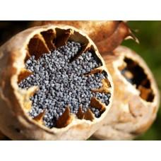Масло семян Мака рафинированное, 50 мл