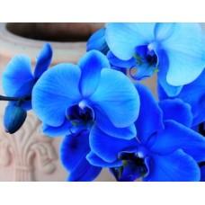 """Отдушка """"Голубая орхидея и кашемир"""", 10 мл"""