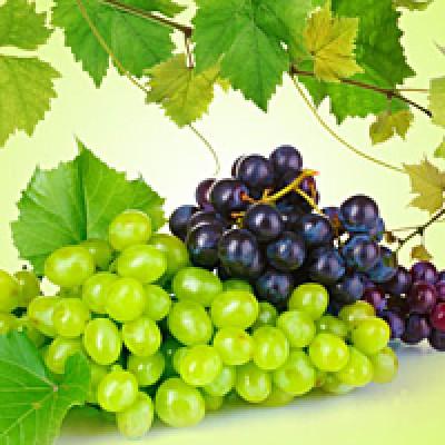 "Отдушка ""Виноград и лемонграсс"", 10 мл"