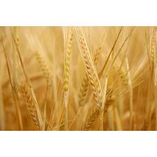 Протеины пшеницы (гидролиз), 15 мл