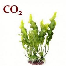 СО2 экстракт Ламинарии (водоросли), 5 мл