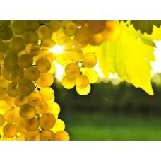 Желтый (пигмент в глицерине) 15 г