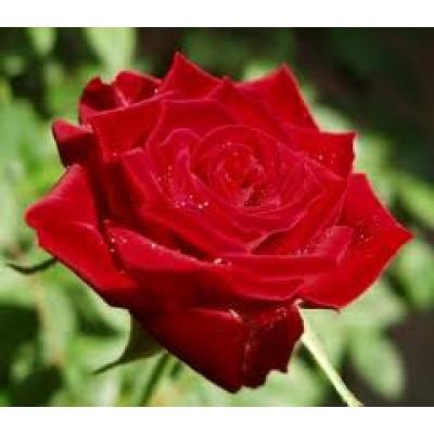 Жирорастворимый краситель Красный 10 г