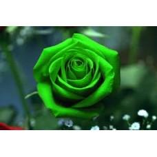 Жирорастворимый краситель Зеленый 10 г